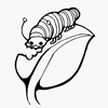 Coloring Page of Caterpillar