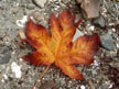 Jigsaw Puzzle: Fall Leaf