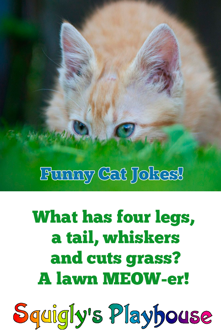 Funny cat jokes for Kids
