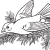 Gold Finch Coloring Page